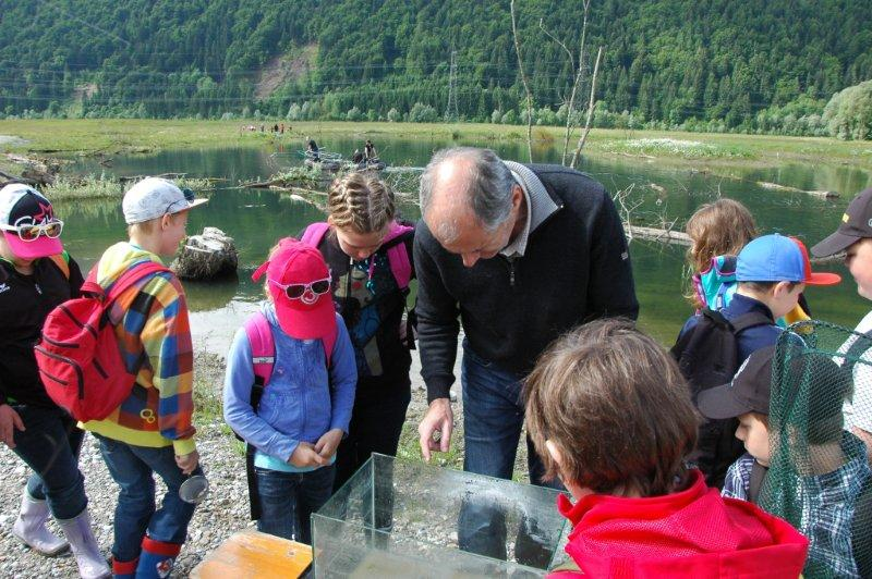 Amphibien Arge Naturschutz